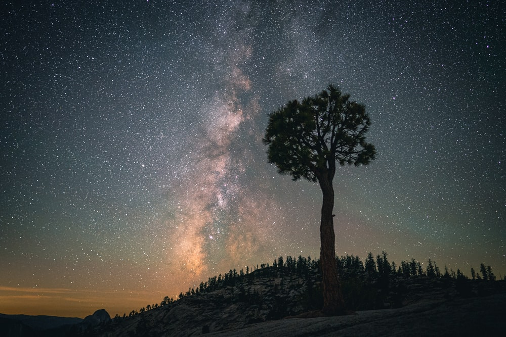 tall tree on hill on nighttime