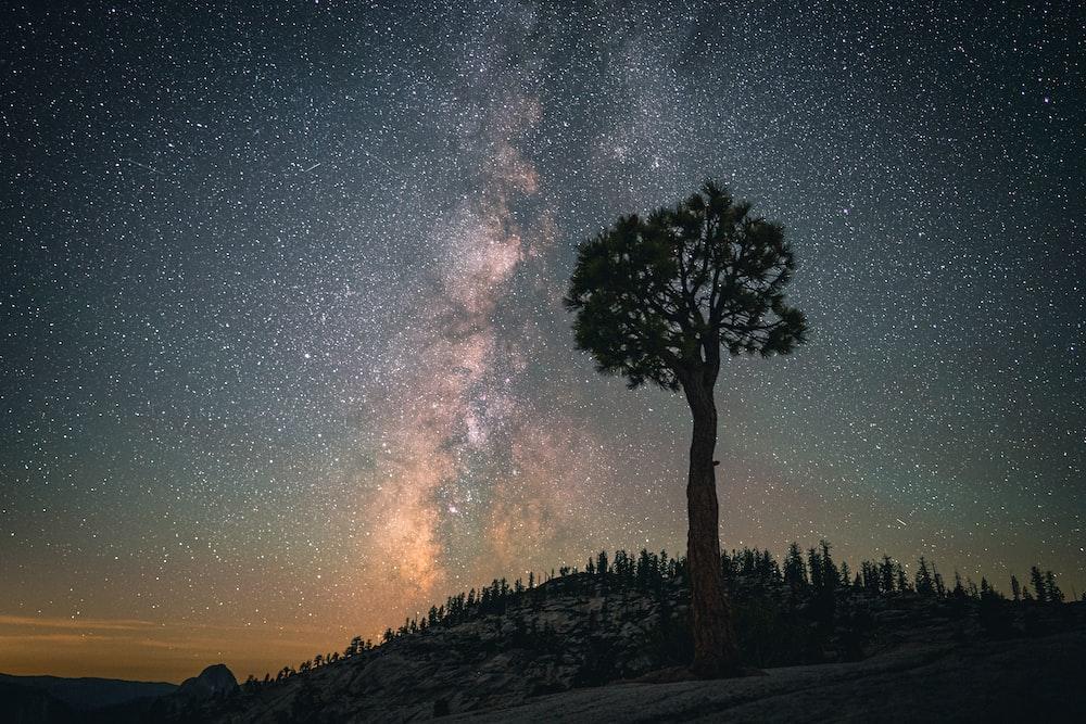 tall tree on hill on nighttime