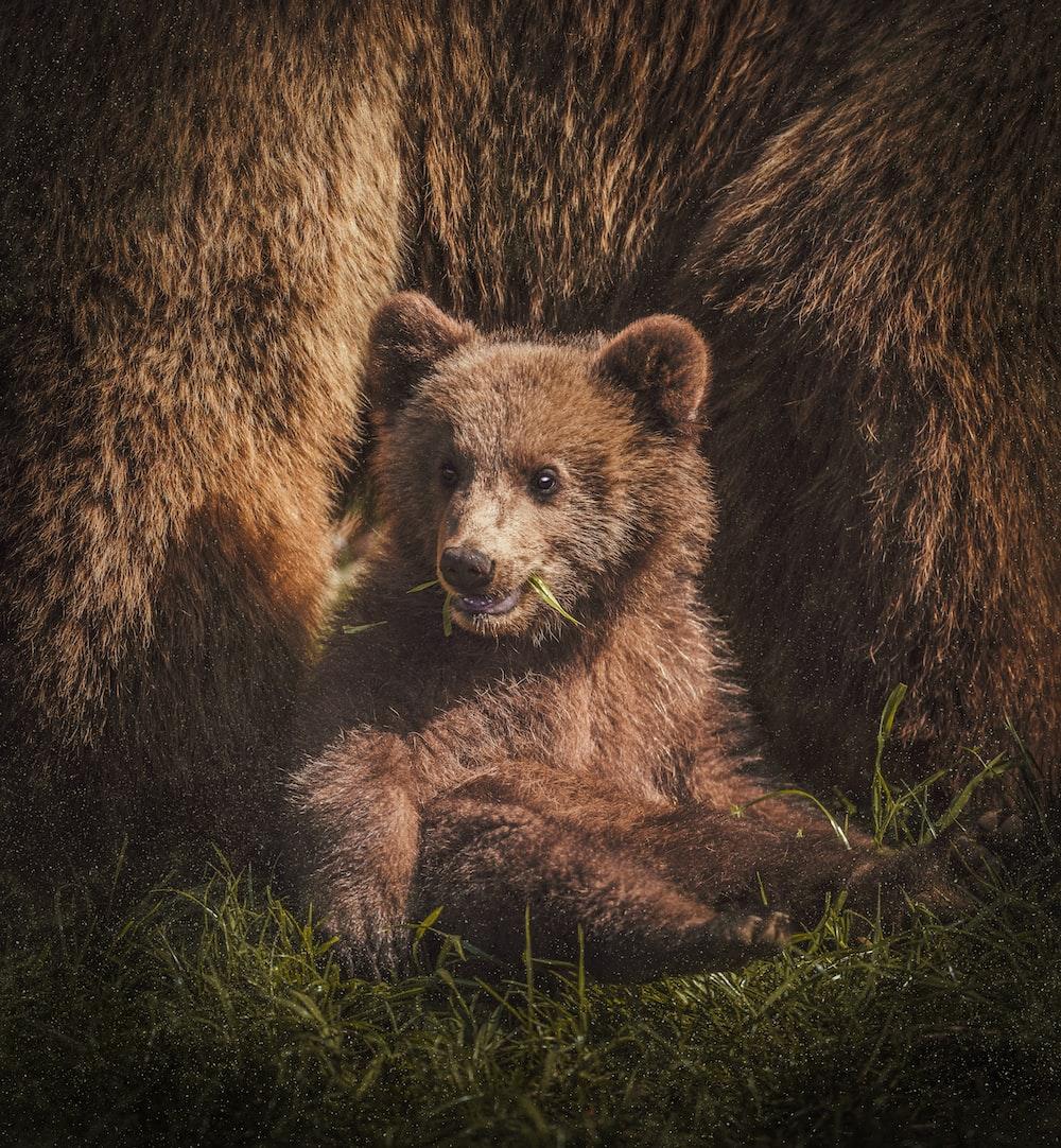 brown bear on focus photography