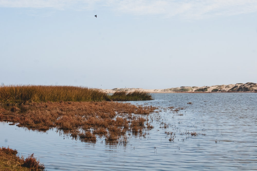 green grasses growing on lake water
