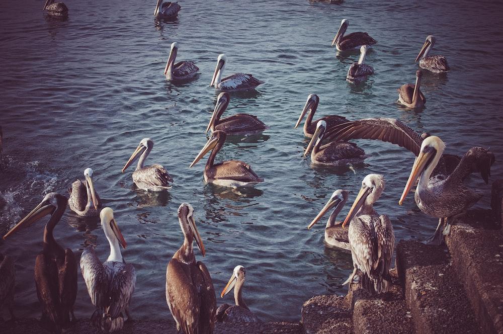 flock of long beak birds at the body of water