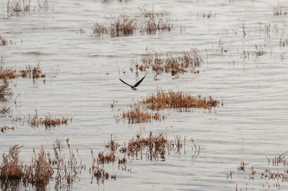 photography of flying bird over body of water during daytime