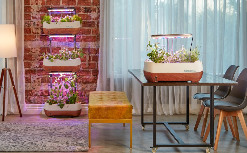 The Different Types Of Vertical Gardening