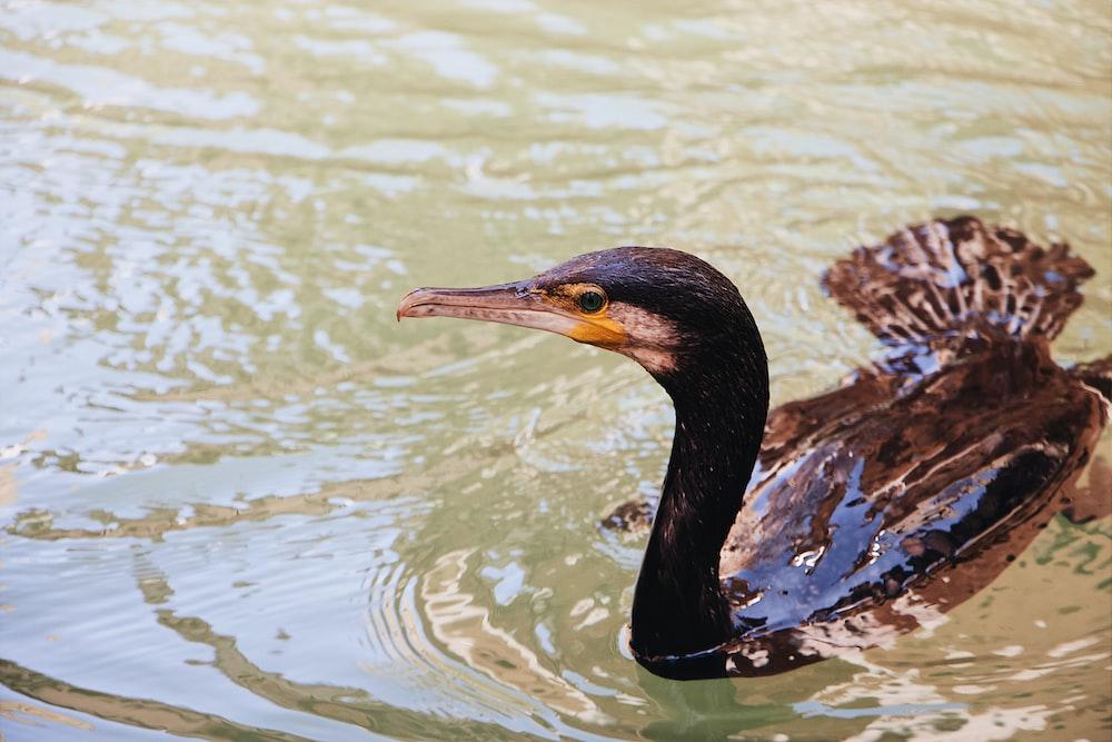 black bird on the water