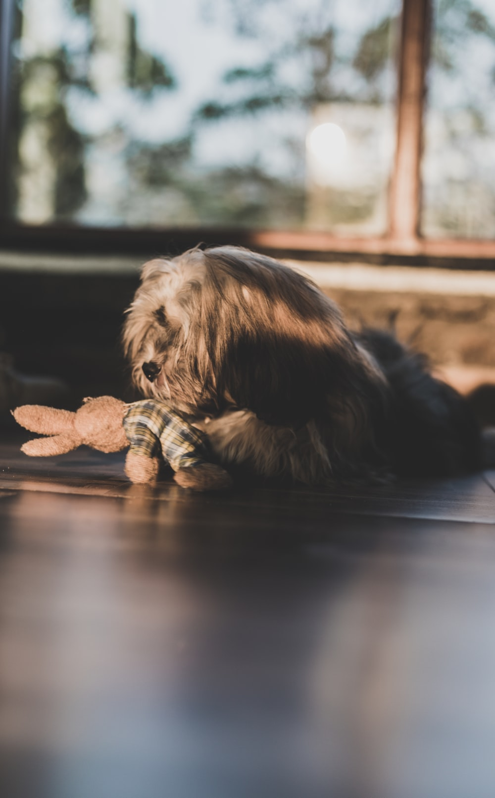 brown long coated puppy lying on floor playing with bunny plush toy