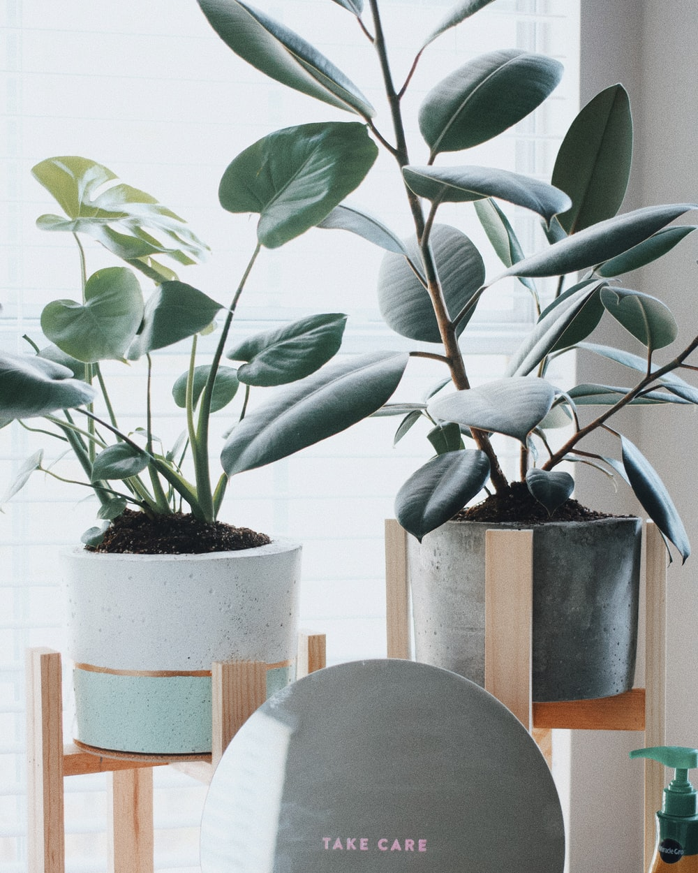 two green potted plants on wooden stands near window