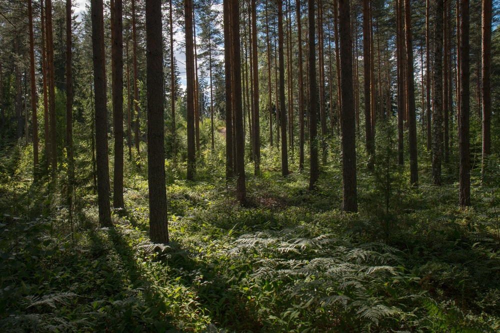 green forest during daytime