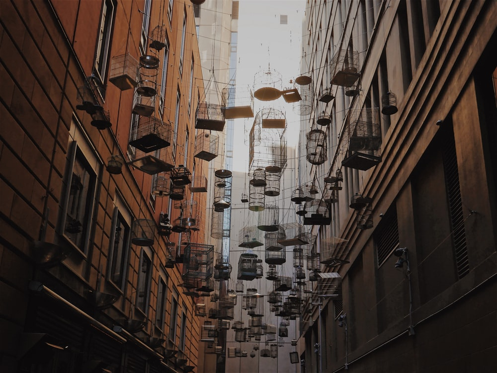 assorted birdcages hanging above the street
