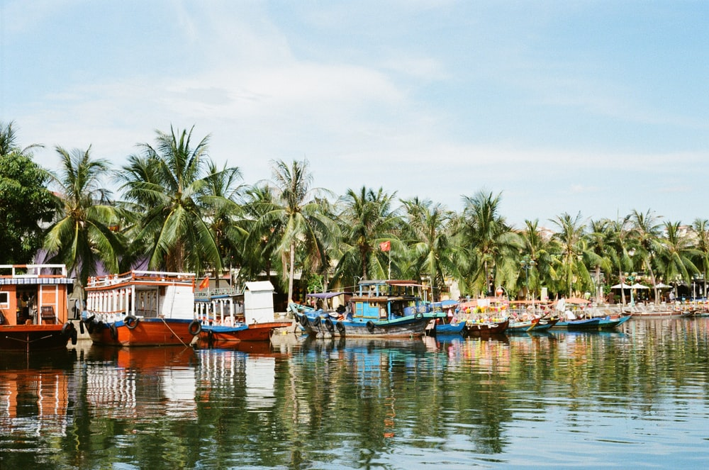 boats moored in beach with coconut trees