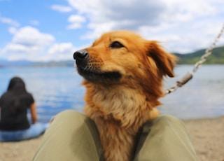 pet dog near water