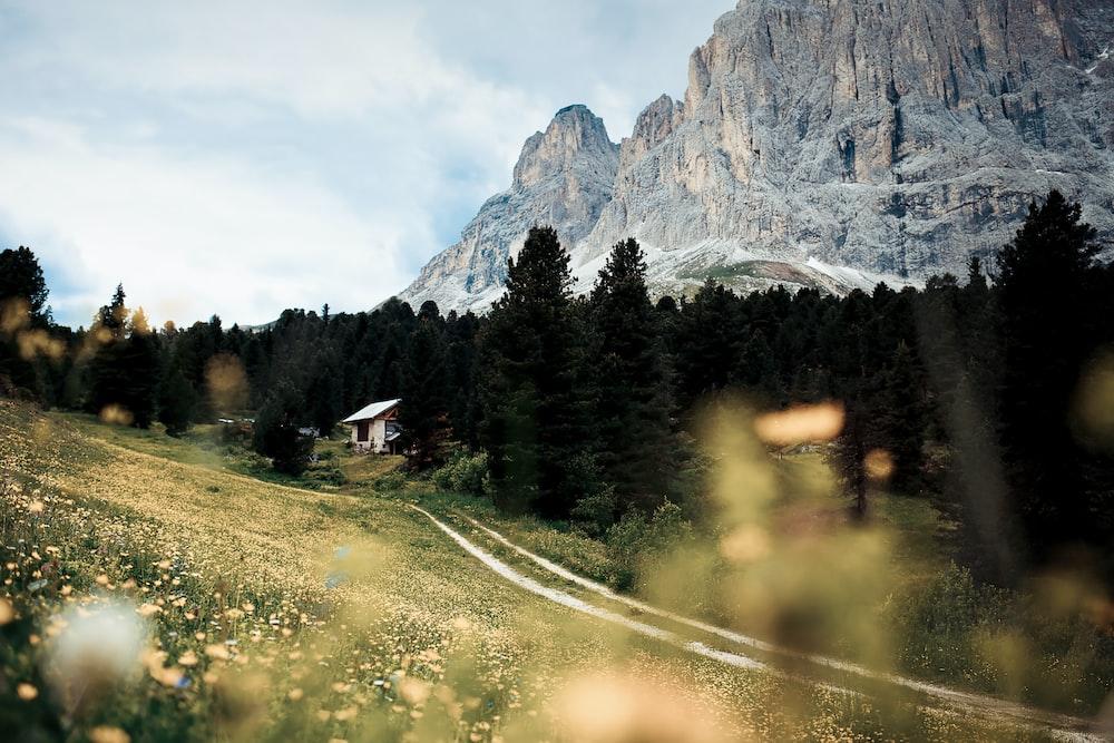road between green grass
