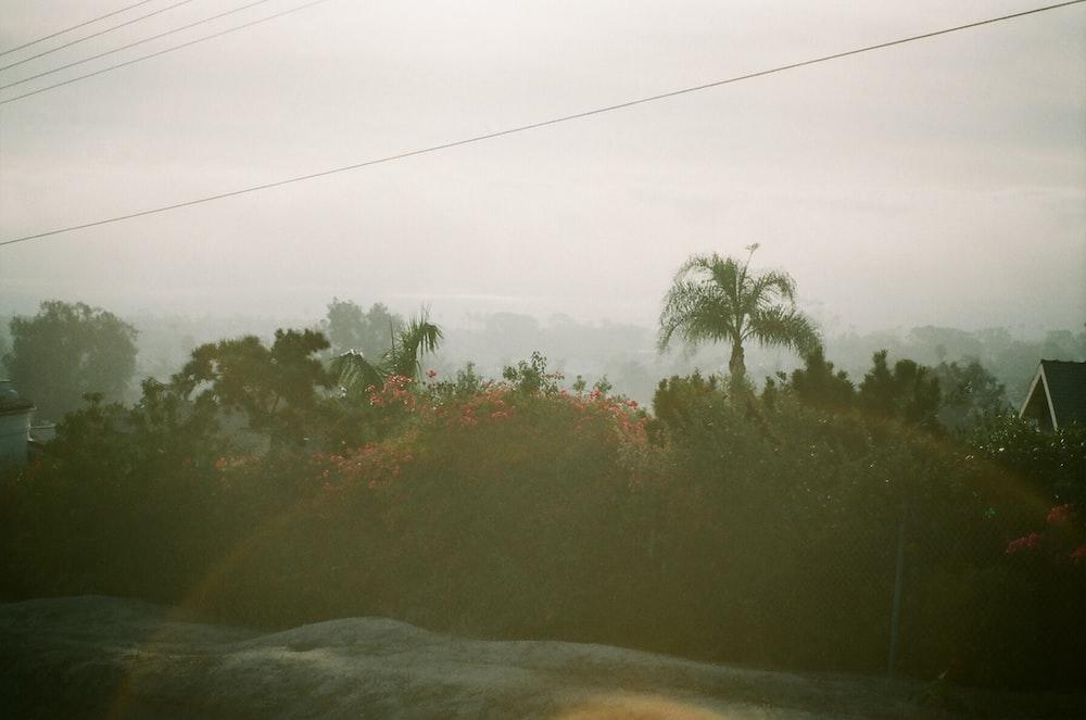 road near trees