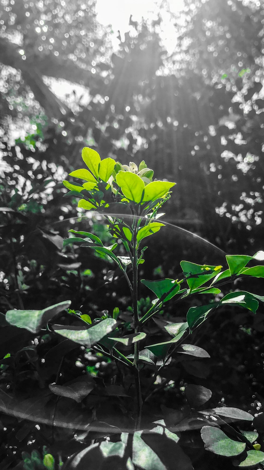 green leaf plant near tall trees