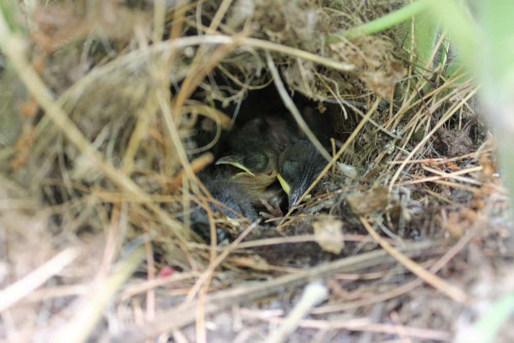 selective focus photography of brown nest with bird chicks