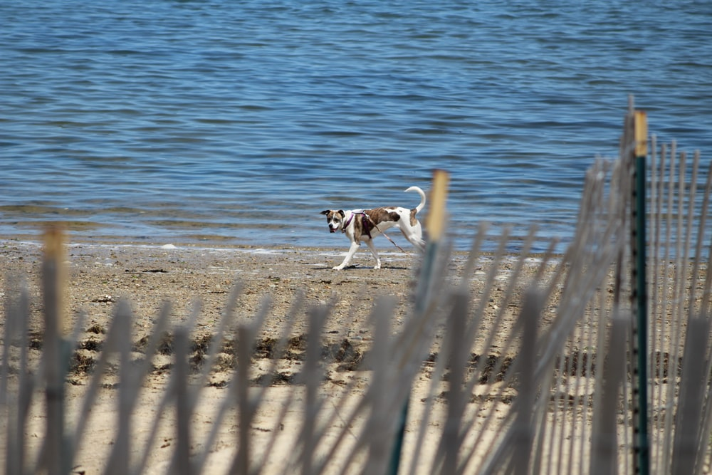 short-coated tan and white dog beside body of water at daytime