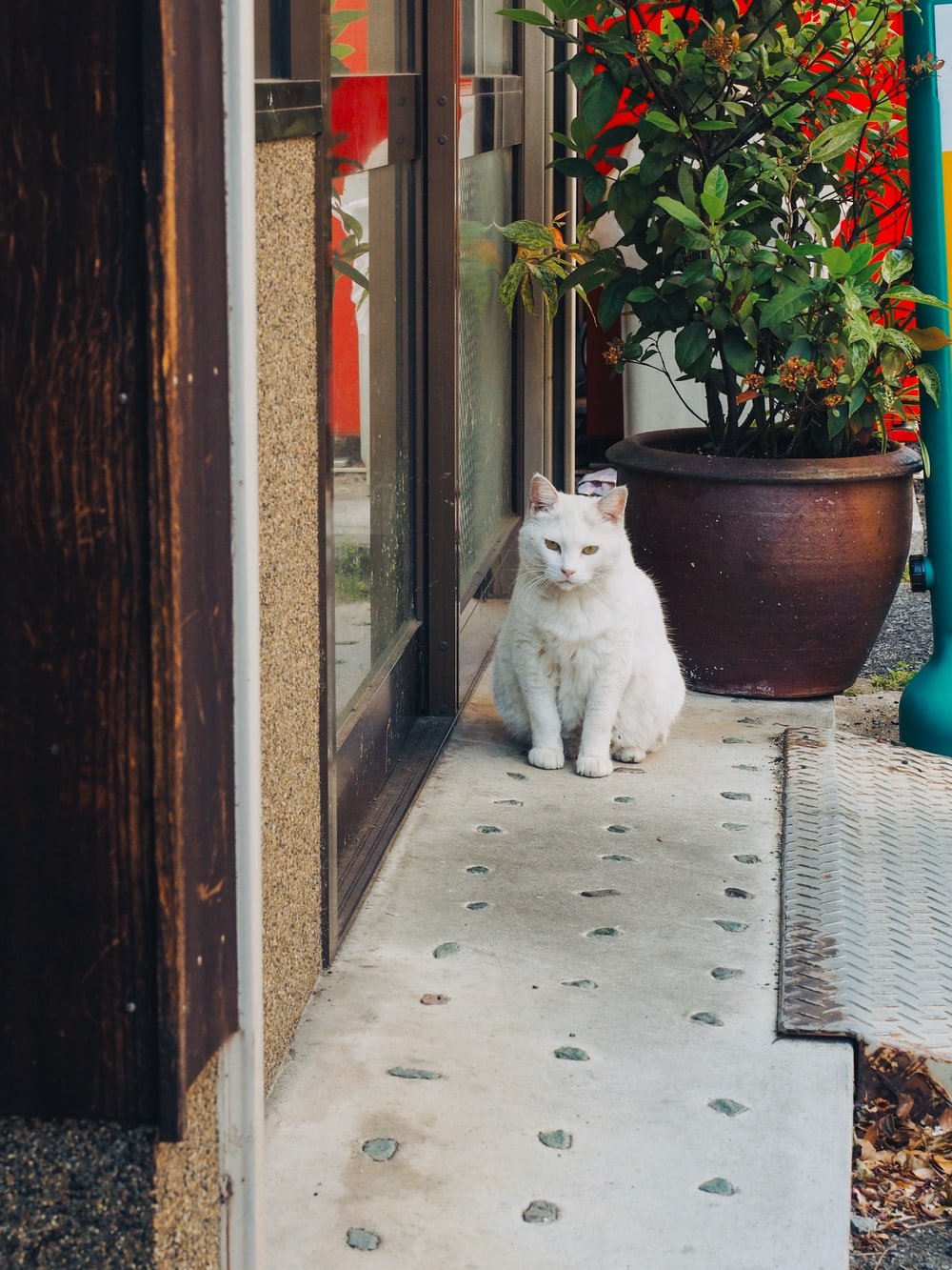 white cat sitting beside wall