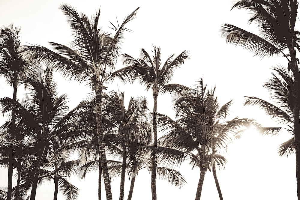 photo of palm trees