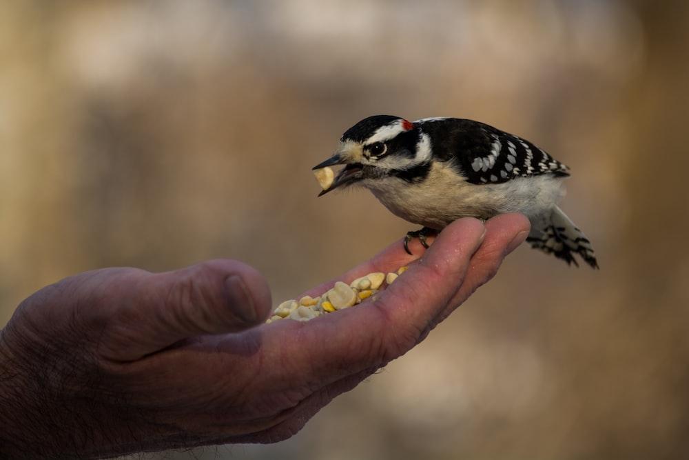 person feeding black and white bird