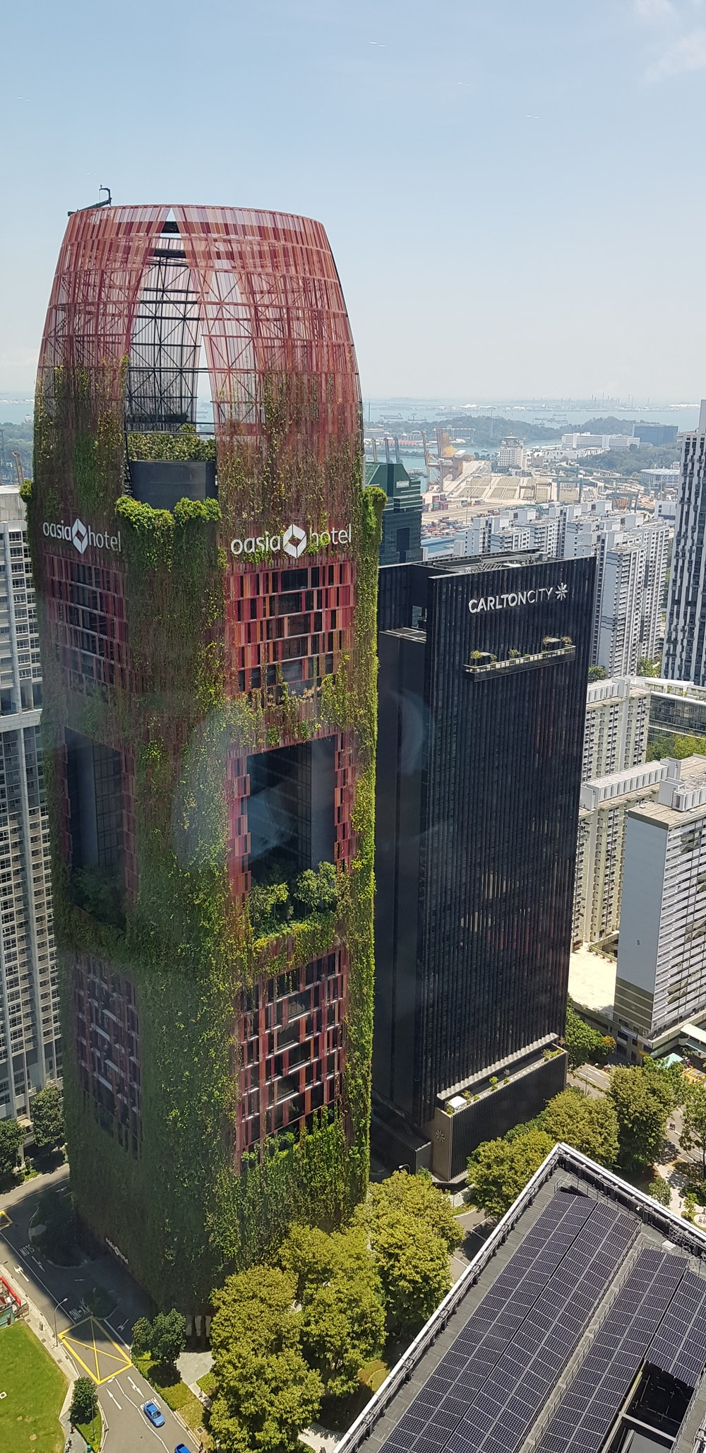 green vines climbing up high rise building