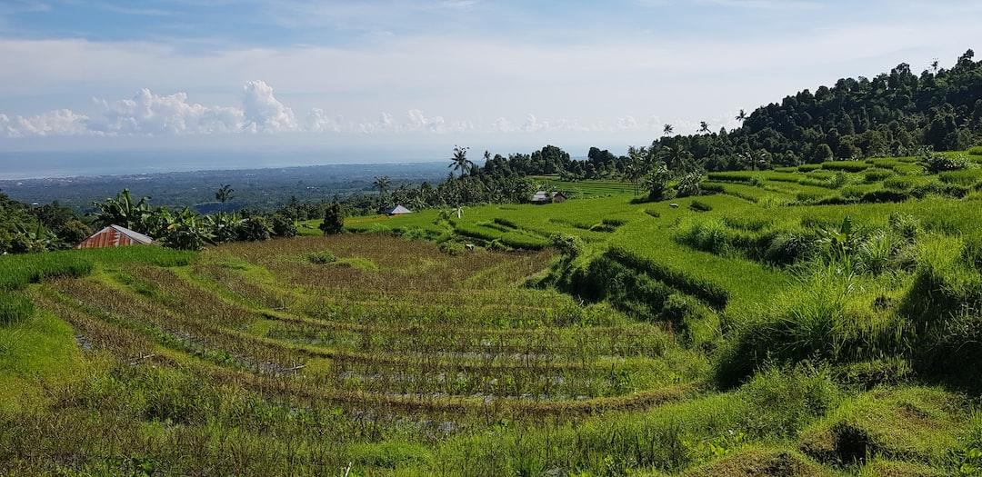 Rice terrace - rice paddy - rice field (Panoramic view)