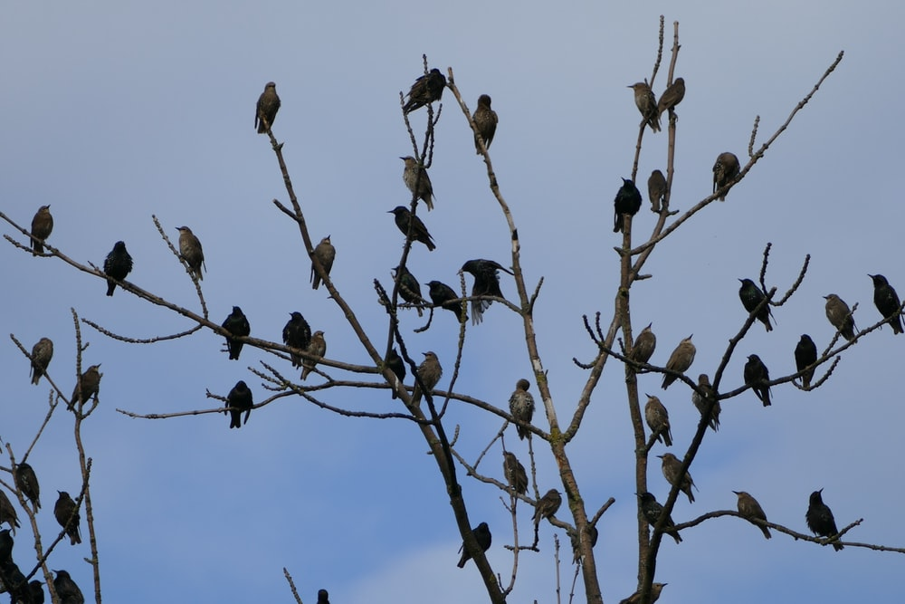 birds on brown branches