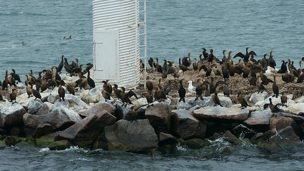 flock of birds on rocks