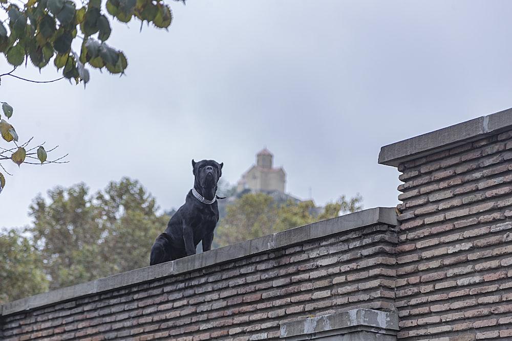 short-coated black dog close-up photography