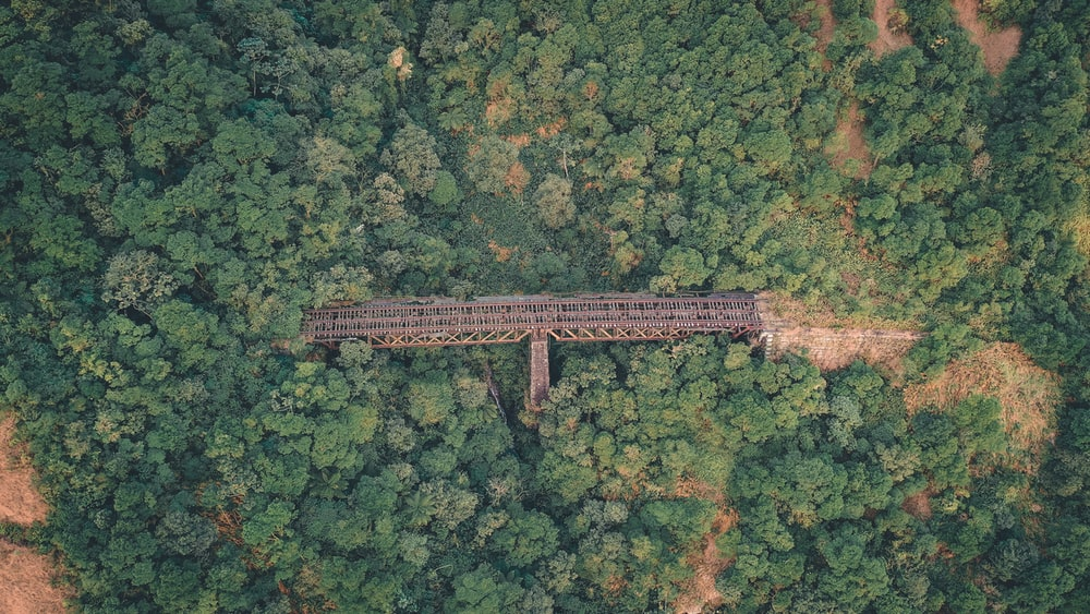aerial photography of green trees and steel bridge