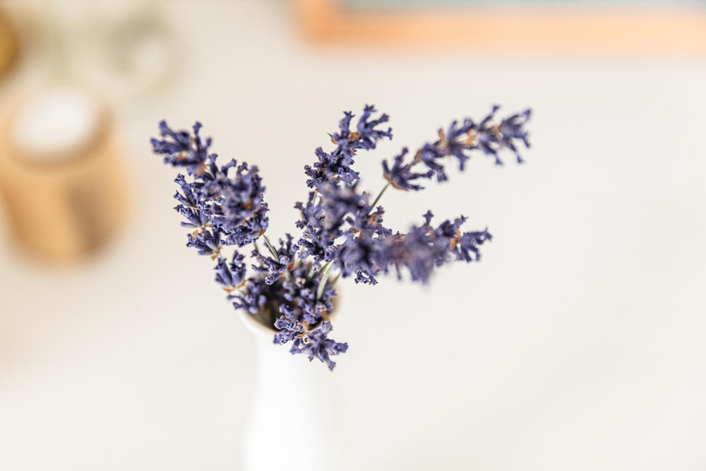 lavender flower on white ceramic vase