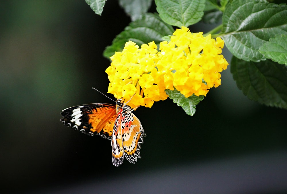 brown and black butterfly perching on yellow petaled flowers during daytime