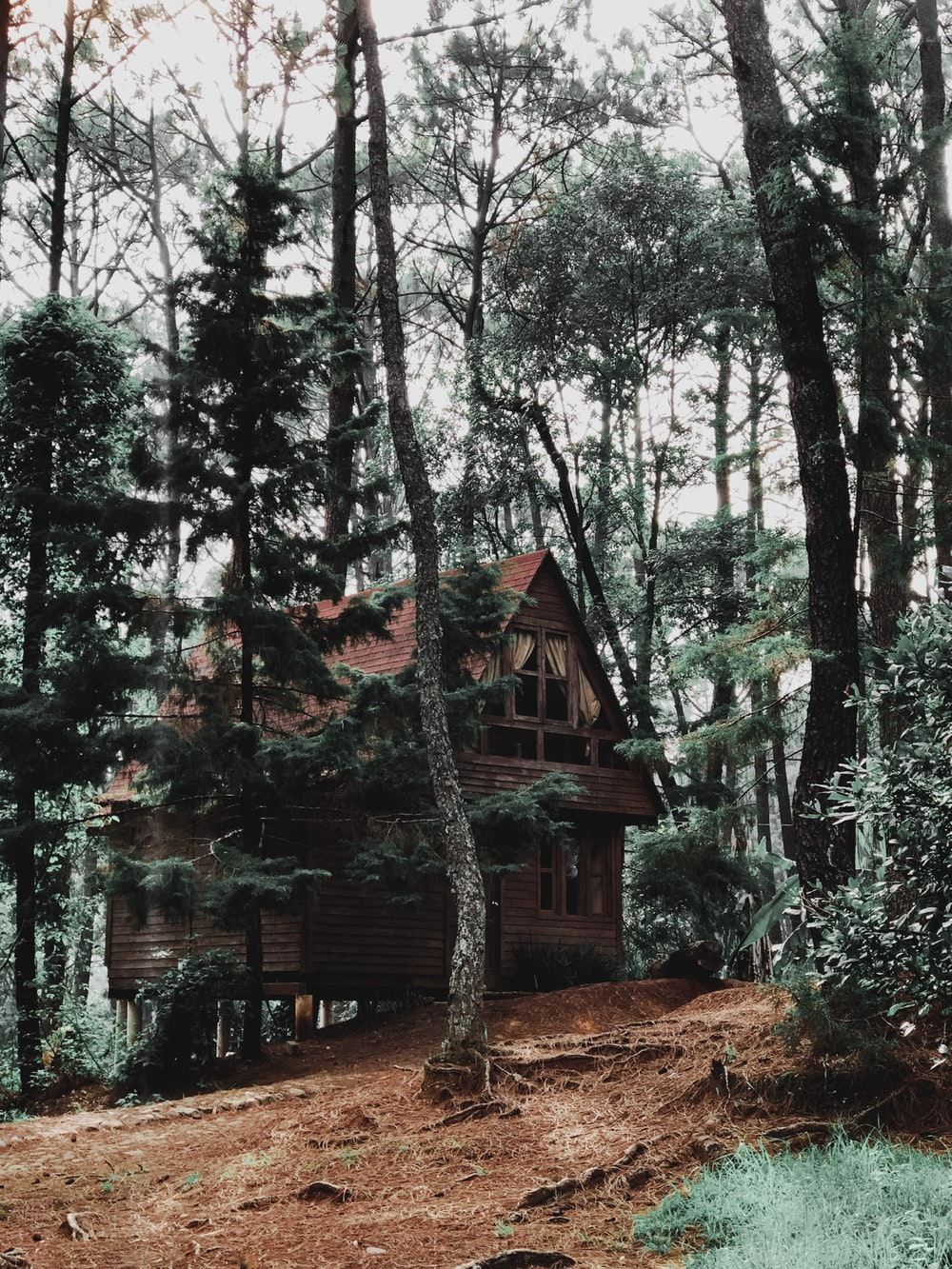 brown wooden house in middle of forest
