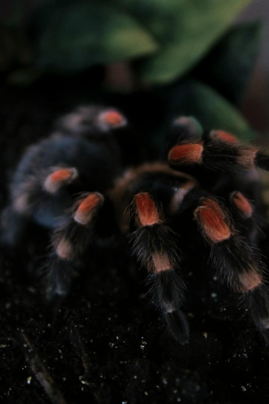 close up focus of tarantula leg hairs