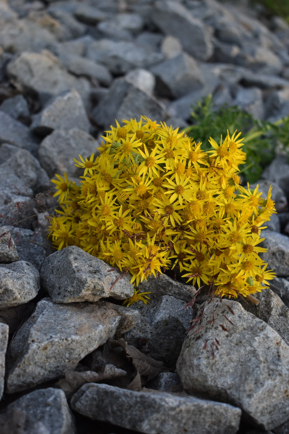 yellow petaled flowers close-up photography