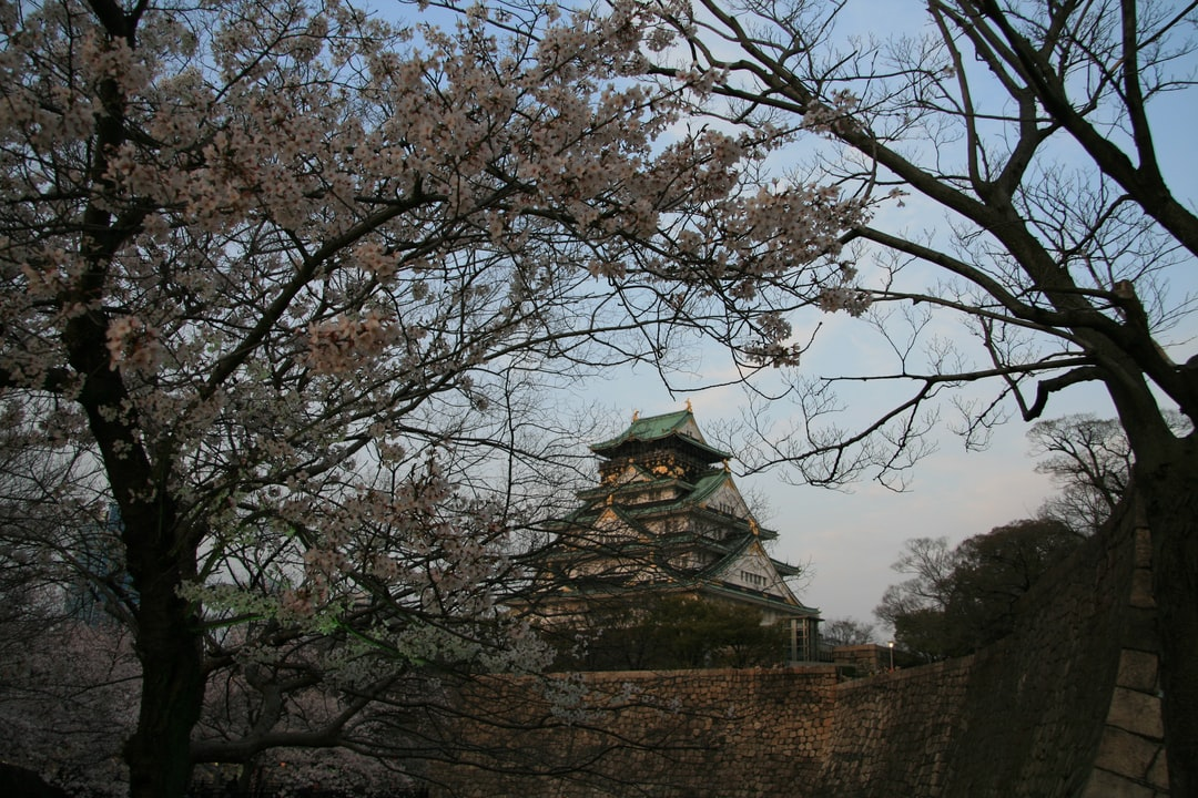 old japanes castle building and palaces of Japanese architecture during cherry blossom festival - Hanami