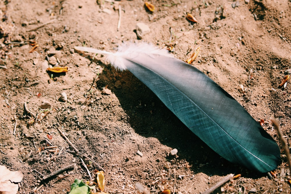 black and white feather