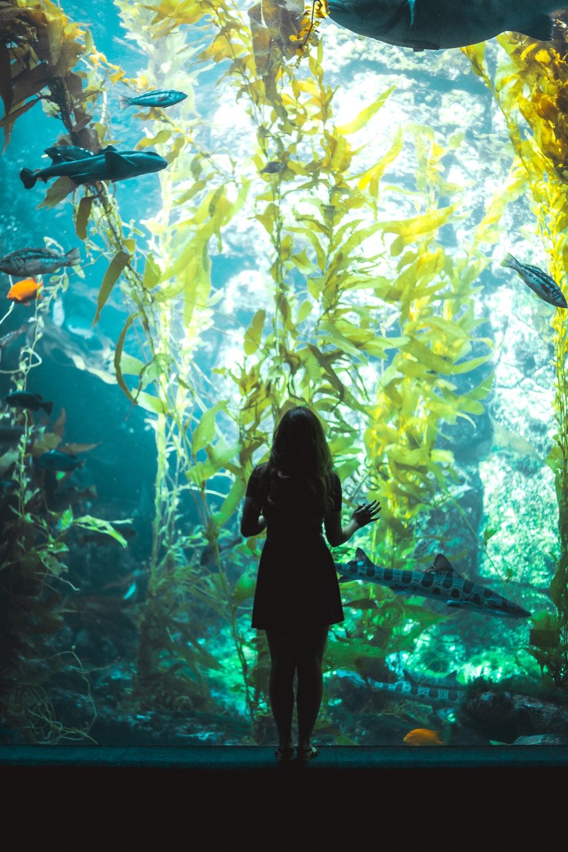 woman standing beside aquarium