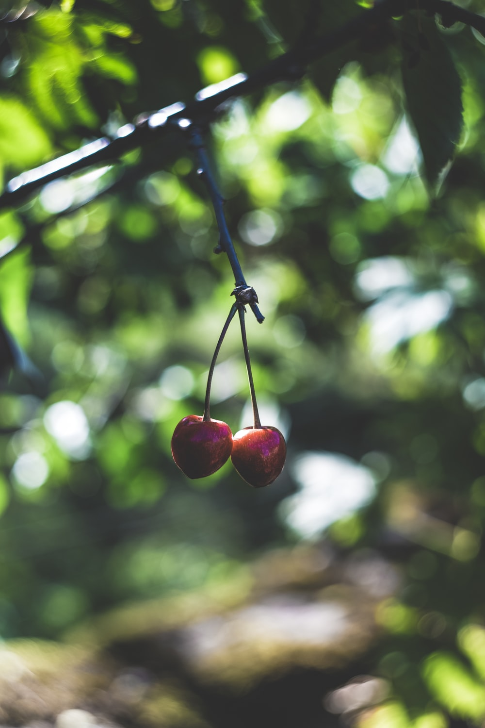 two cherry fruits