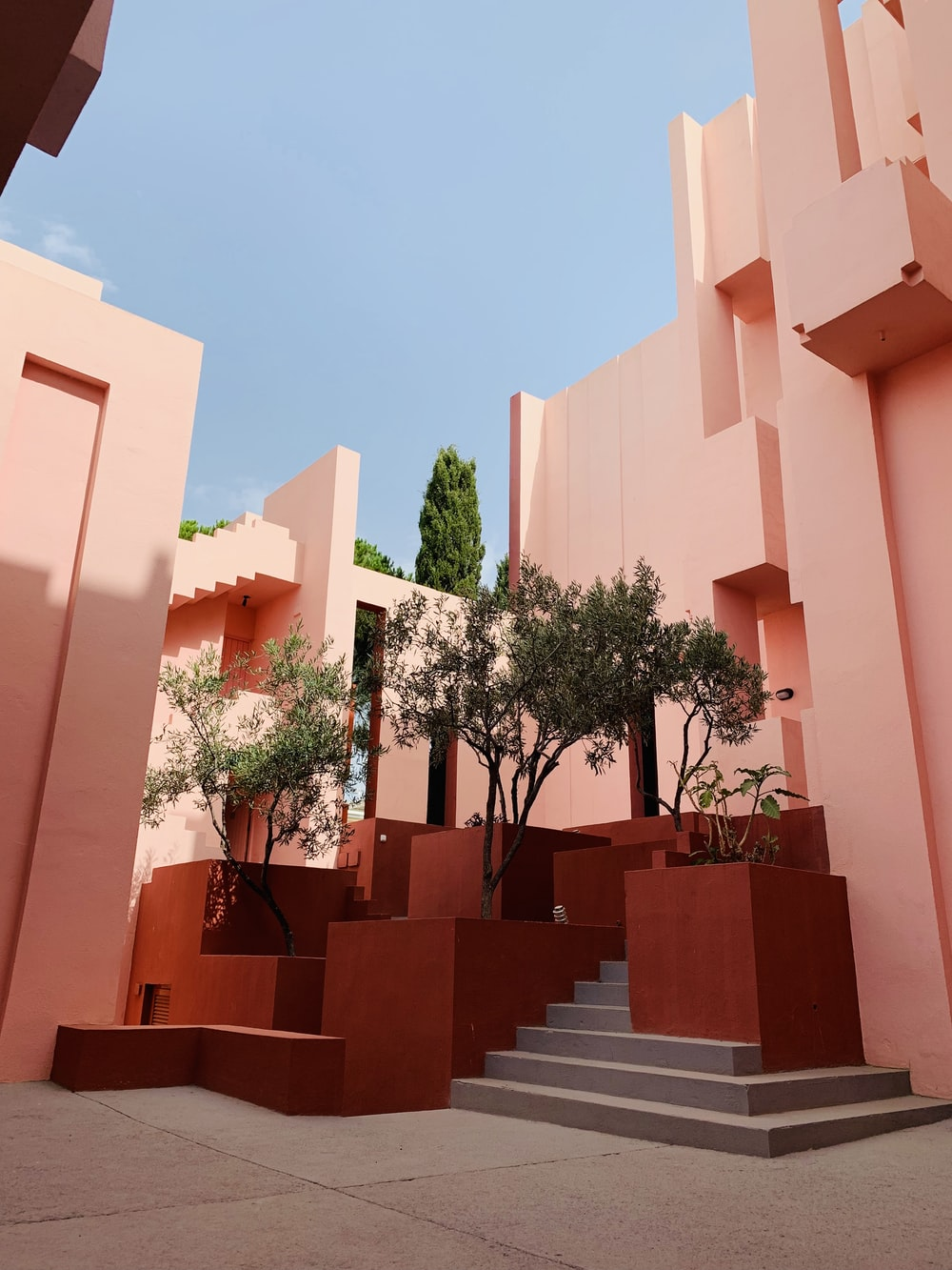 green leafed trees near pink buildings