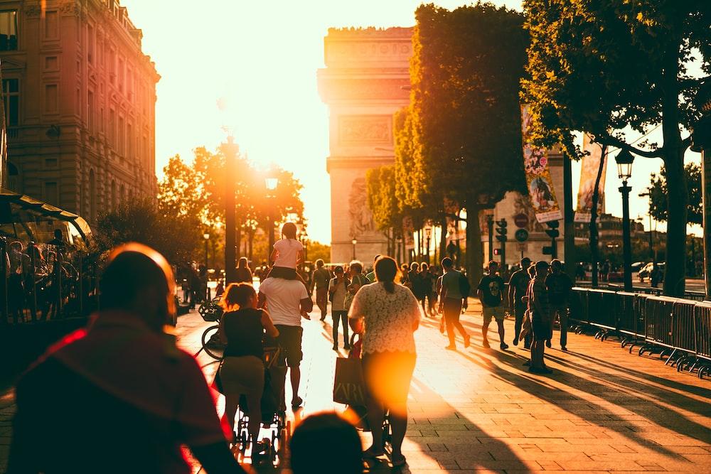 people walking towards tree during daytime