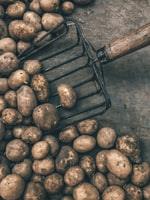 Growing Potatoes in Hay Bales