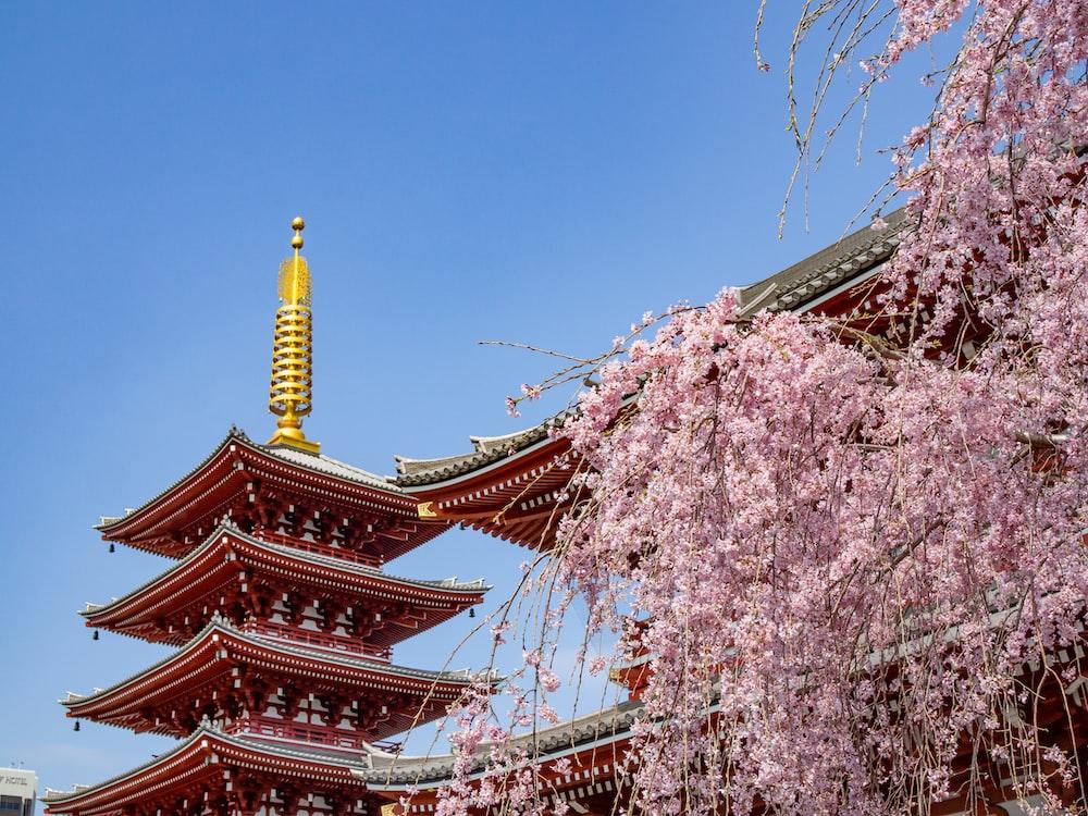 pink petaled flower trees near
