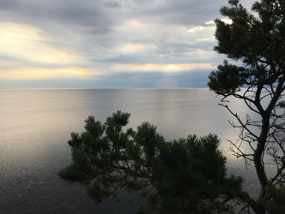 body of water near tree at daytime