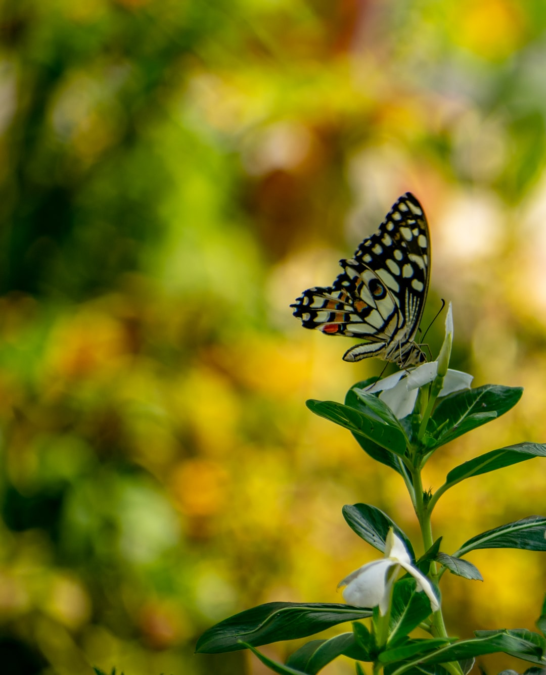 Beautiful Butterfly Pictures | Download Free Images on ...