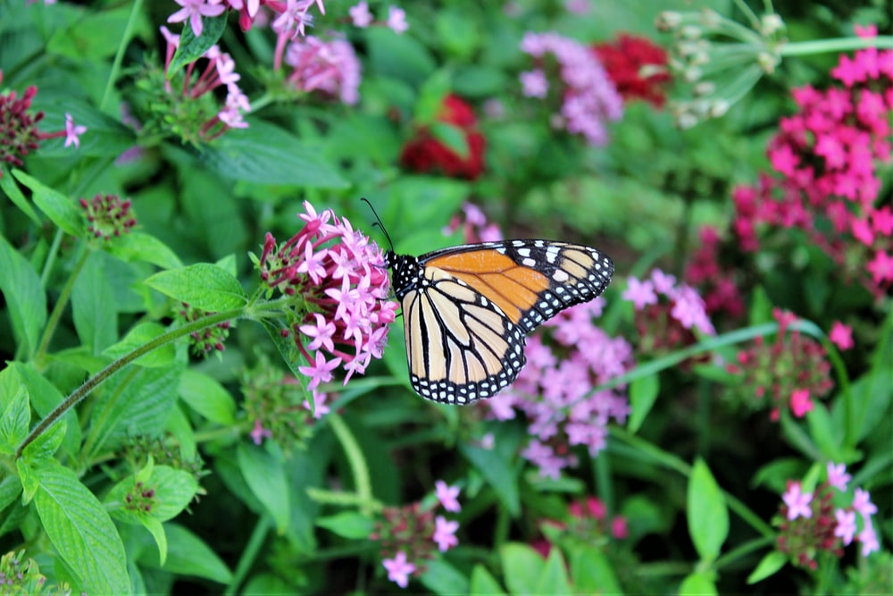selective-focus photography of butterfly perching on flower