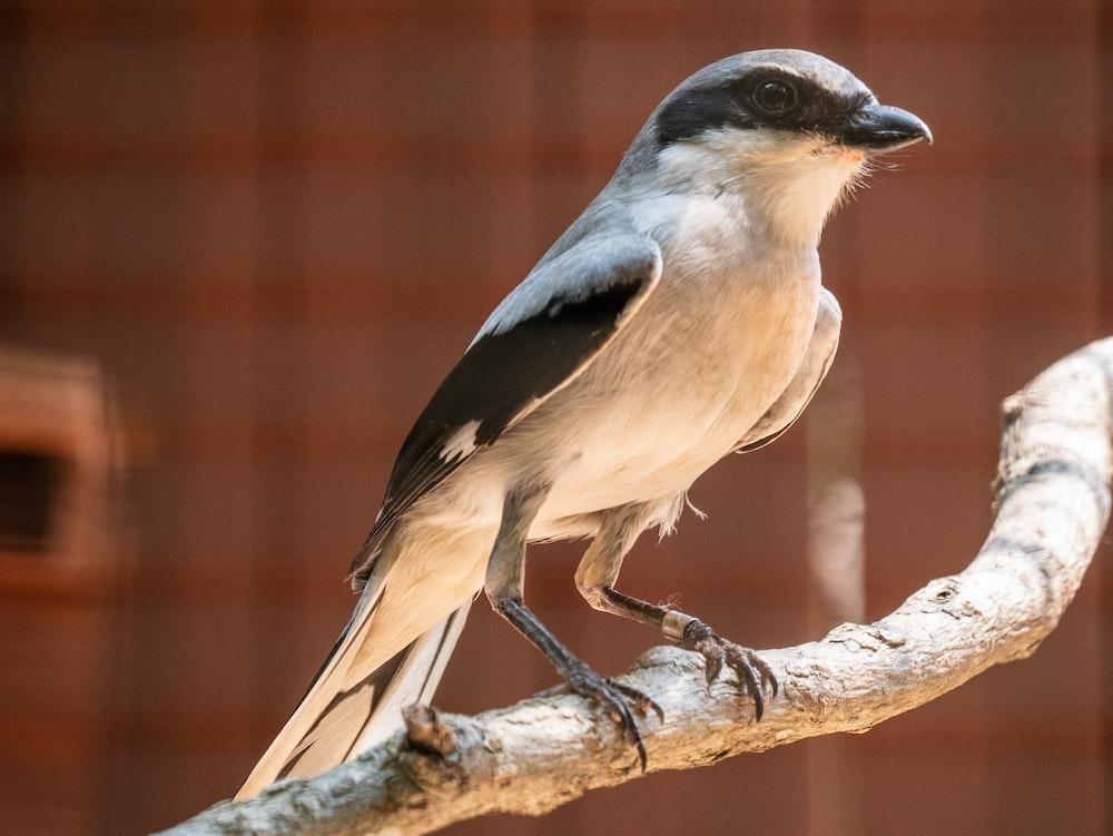bird on tree brunch