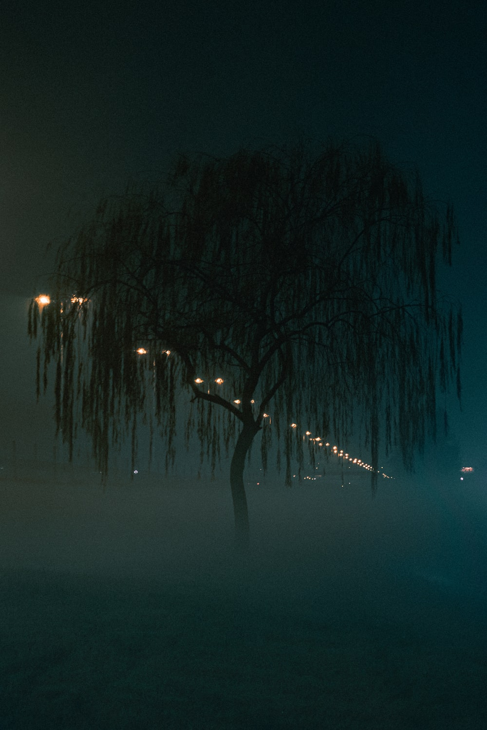 weeping willow in fogs