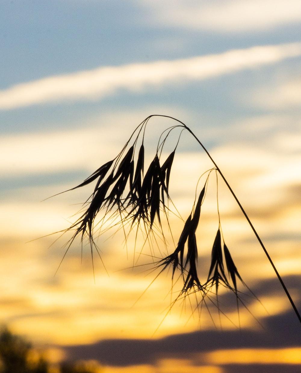 leaf during golden hour