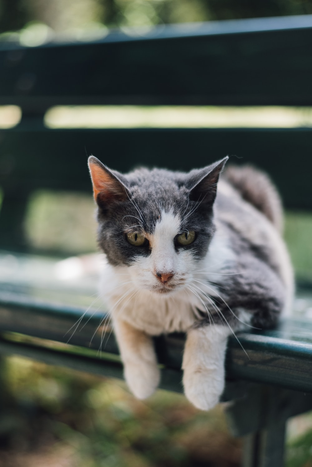 black and white cat lying on bench