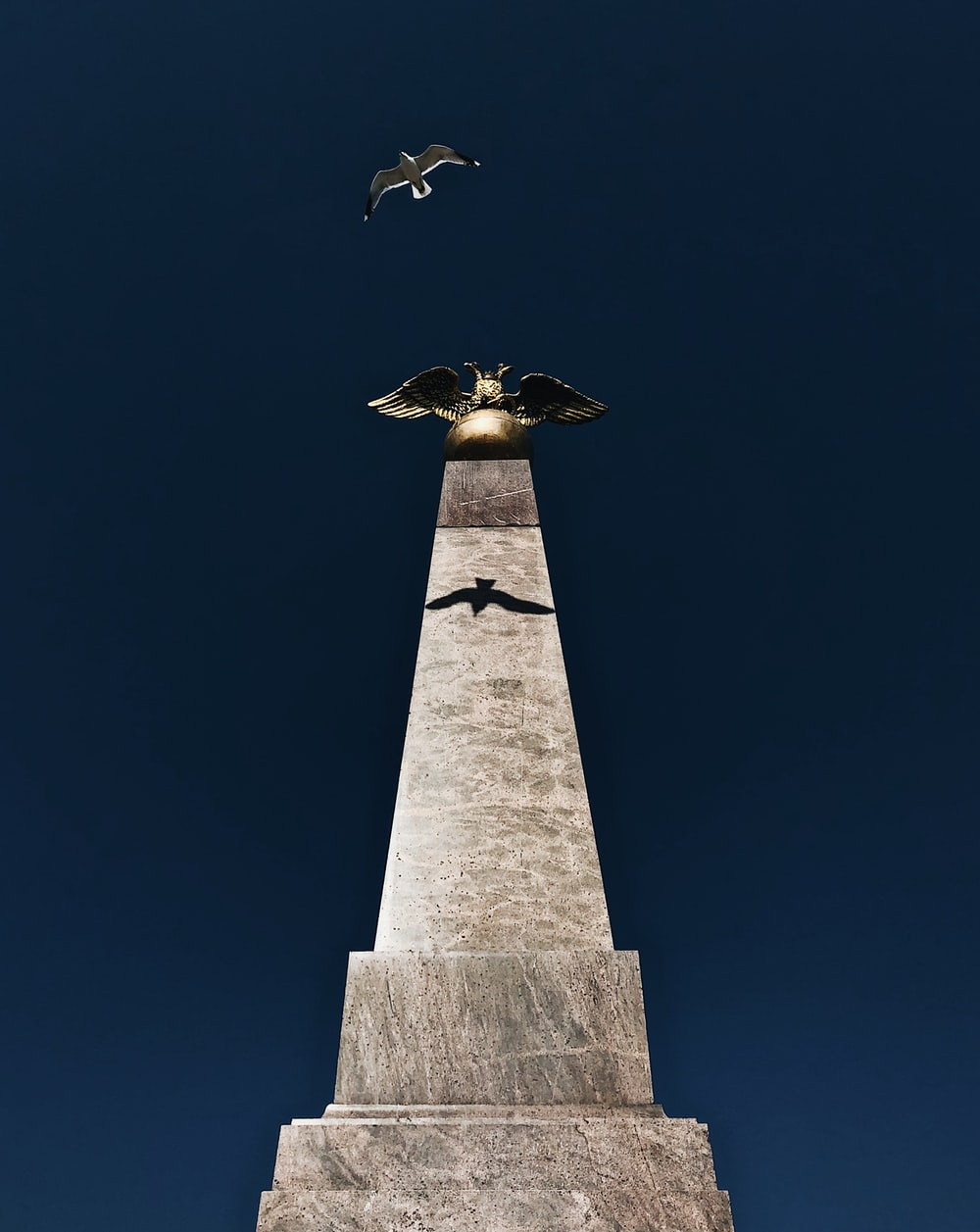 low-angle photography of concrete tower and flying bird