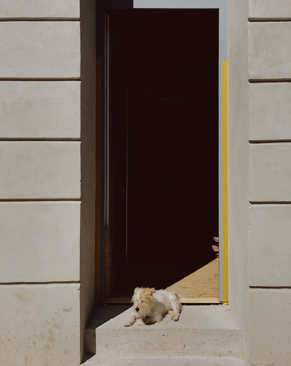 brown and white short coat small dog lying on house front step